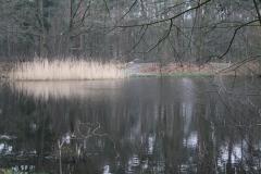 Hotel-De-Volksabdij-012-Visvijver-in-het-bos