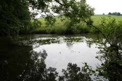 Meerssen-Raar-023-Poel-met-waterlelies