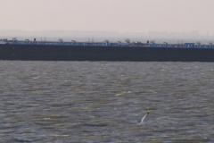 Haven-bij-de-Schelde-020-Voorbijvarende-schepen