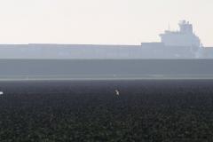 Rilland-004-Vergezicht-met-akker-en-boot-op-de-Schelde